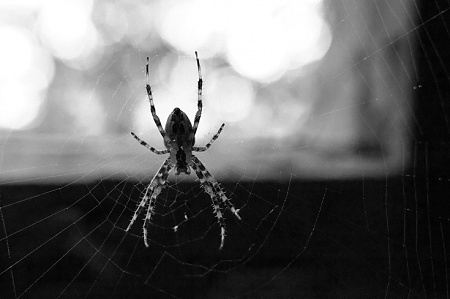 Arachnophobia anyone?